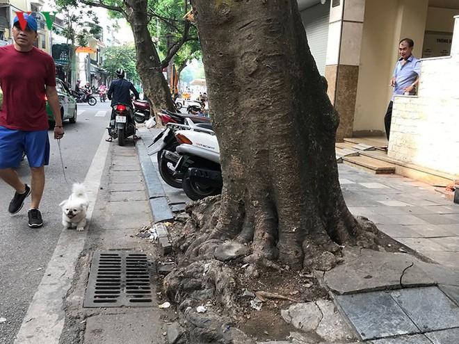 Hiểm họa từ cây xanh có nguy cơ gãy đổ trong mùa mưa bão - Ảnh 11.