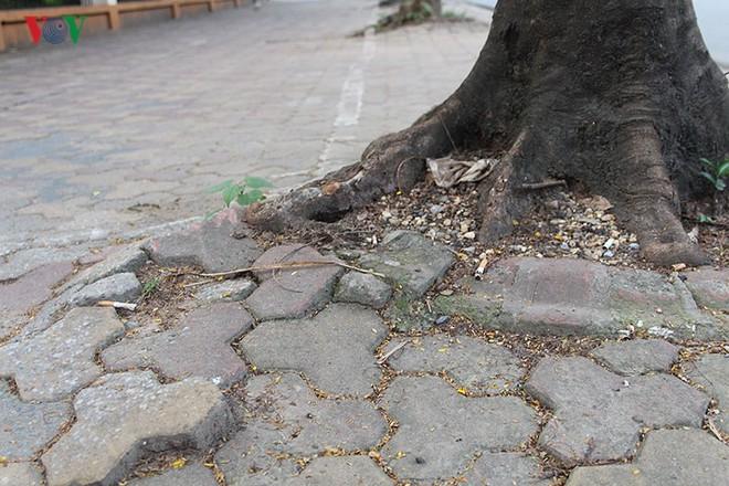 Hiểm họa từ cây xanh có nguy cơ gãy đổ trong mùa mưa bão - Ảnh 4.