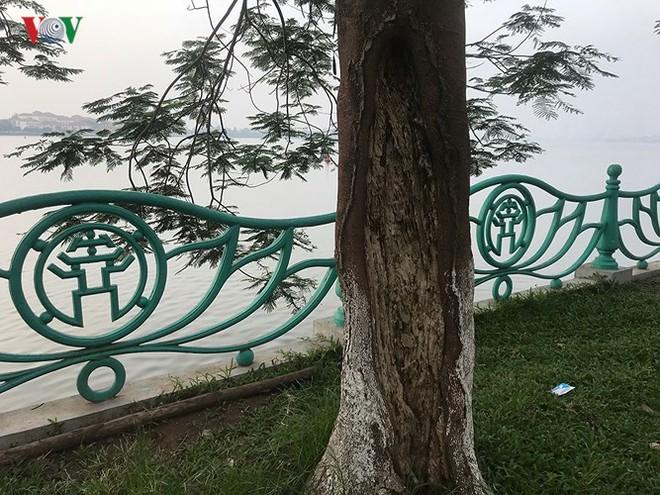 Hiểm họa từ cây xanh có nguy cơ gãy đổ trong mùa mưa bão - Ảnh 5.
