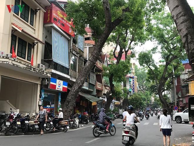 Hiểm họa từ cây xanh có nguy cơ gãy đổ trong mùa mưa bão - Ảnh 7.