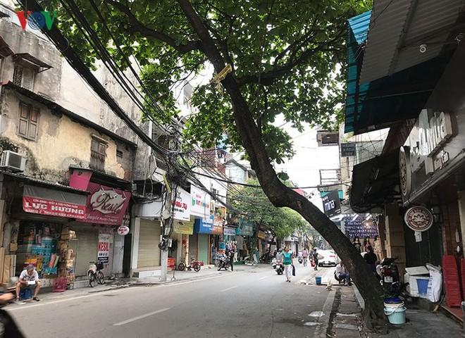 Hiểm họa từ cây xanh có nguy cơ gãy đổ trong mùa mưa bão - Ảnh 9.