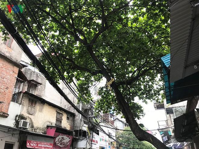 Hiểm họa từ cây xanh có nguy cơ gãy đổ trong mùa mưa bão - Ảnh 10.