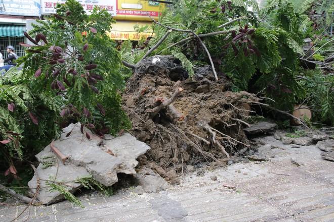 Sài Gòn xuất hiện gió lốc lớn, nhiều cây xanh bị quật ngã bật gốc - Ảnh 3.