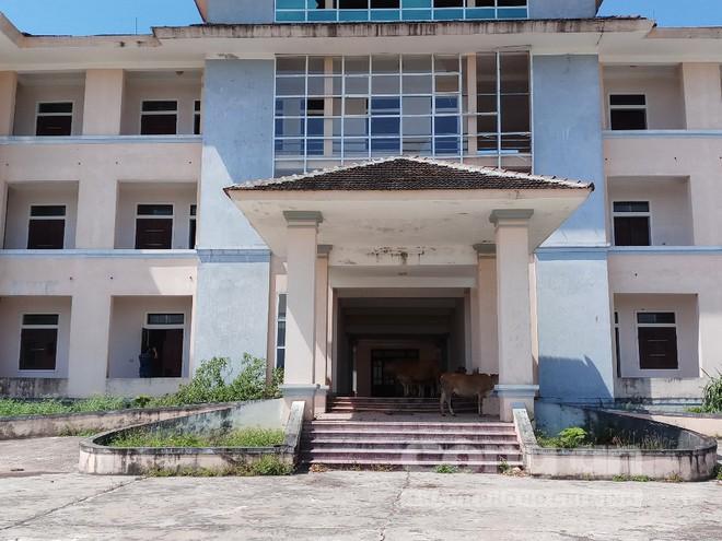 Nhường đất cho cty Formosa, trụ sở mới trị giá 33 tỷ đồng thành nơi trú ngụ của trâu bò, Bí thư xã nói gì? - Ảnh 1.