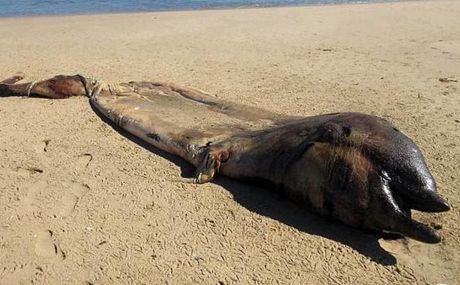 Bí ẩn sinh vật nửa cá voi - nửa cá heo ở biển Namibia khiến các nhà khoa học bối rối