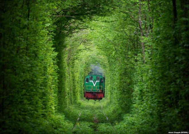 """Ghé thăm """"đường hầm tình yêu"""" đẹp ma mị ở Ukraine, nơi những cặp đôi một lần lạc bước sẽ chẳng muốn quay về - Ảnh 2."""