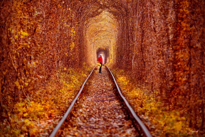 """Ghé thăm """"đường hầm tình yêu"""" đẹp ma mị ở Ukraine, nơi những cặp đôi một lần lạc bước sẽ chẳng muốn quay về - Ảnh 8."""