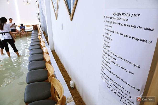 Chủ quán cafe Sài Gòn cho khách cởi giày, ngâm chân dưới hồ cá: Có nội quy cho khách, chúng tôi còn cử 8 nhân viên túc trực 24/24 theo dõi cá - Ảnh 3.