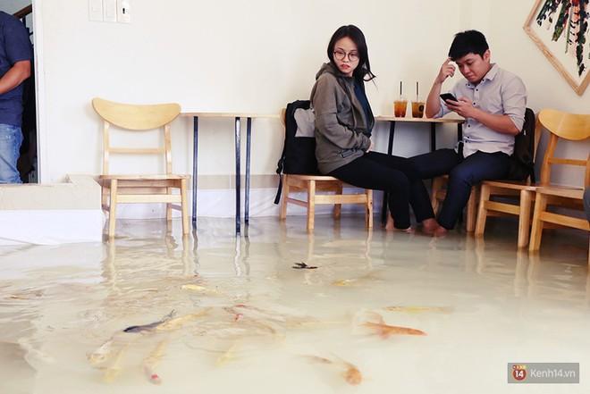 Chủ quán cafe Sài Gòn cho khách cởi giày, ngâm chân dưới hồ cá: Có nội quy cho khách, chúng tôi còn cử 8 nhân viên túc trực 24/24 theo dõi cá - Ảnh 8.
