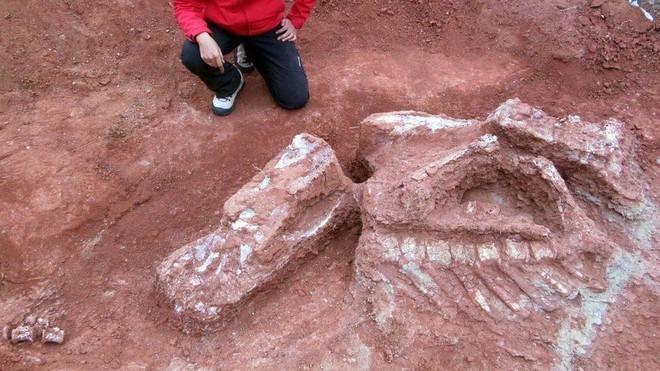 Phát hiện hóa thạch khổng lồ mới: Khủng long còn lớn hơn tưởng tượng - Ảnh 3.