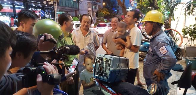 Giải cứu chim Cắt lưng xám quý hiếm mắc kẹt trên dây điện ở Sài Gòn - Ảnh 2.