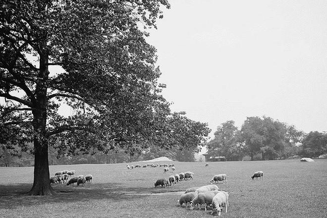 Hình ảnh thành phố New York hoa lệ khi mới chỉ là đất nông nghiệp - Ảnh 7.
