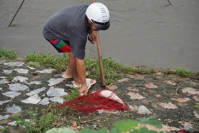Người Hà Nội đổ xô ra sông bắt cá sau cơn mưa - Ảnh 2.