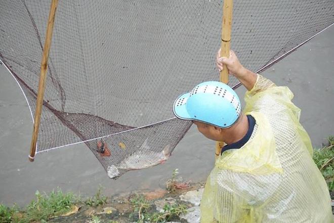Người Hà Nội đổ xô ra sông bắt cá sau cơn mưa - Ảnh 3.