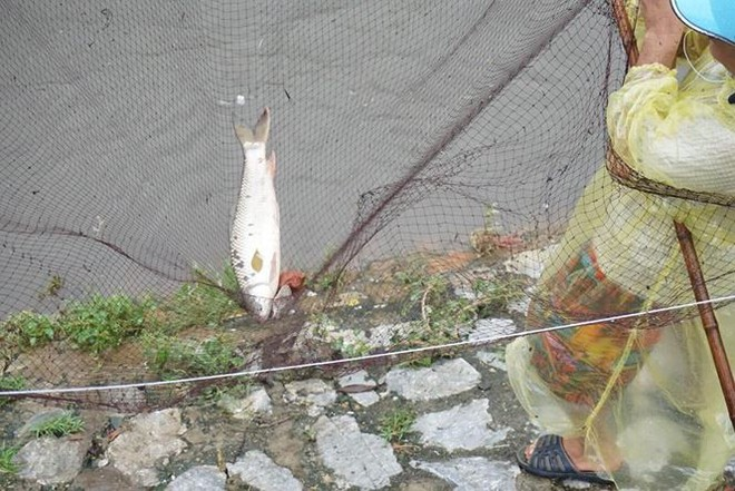 Người Hà Nội đổ xô ra sông bắt cá sau cơn mưa - Ảnh 8.