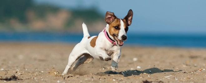 Thêm một lý do để nuôi chó: Chúng sẽ đến bên chủ nếu như chúng ta khóc - Ảnh 1.