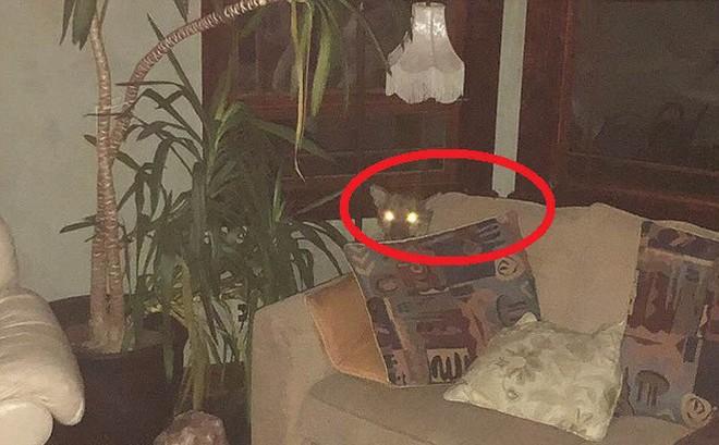 """Phát hiện sư tử """"ghé thăm"""" và ngủ trên ghế suốt 6 tiếng, chủ nhà đã làm 1 việc đáng nể"""