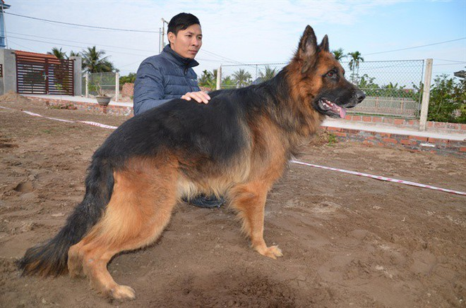 Chuyên gia huấn luyện bật mí bí mật không ngờ tại sao chó cắn chủ - Ảnh 2.