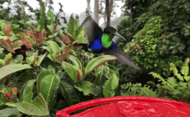 Xem video chim ruồi vỗ cánh sống động đến từng giây, quay bằng chế độ siêu chậm của iPhone X