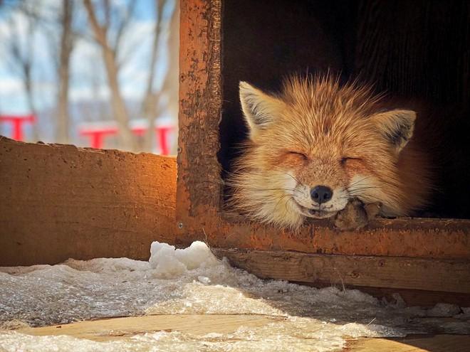 Cáo ngủ, chó săn, mắt cá: Không thể tin nổi những bức ảnh này lại được chụp bằng iPhone! - Ảnh 1.