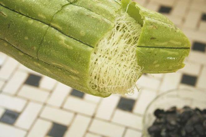Không chỉ ngon mát, loại quả có nhiều ở Việt Nam này là vị thuốc quý thanh nhiệt, giải độc - Ảnh 2.