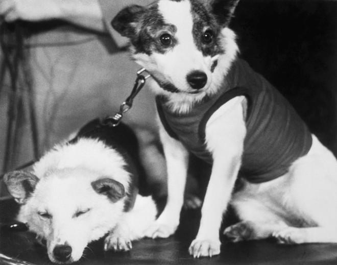 Sứ mệnh có 1-0-2 của 3 chú chó phi hành gia Liên Xô: Laika chết khi tròn 3 tuổi - Ảnh 5.