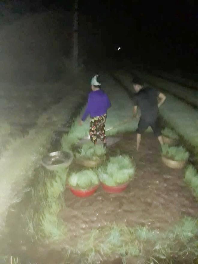 Nhìn cảnh các mẹ lọ mọ rọi đèn đi cấy giữa đêm tránh cái nóng 40 độ này mới biết những bác nông dân vất vả thế nào - Ảnh 3.