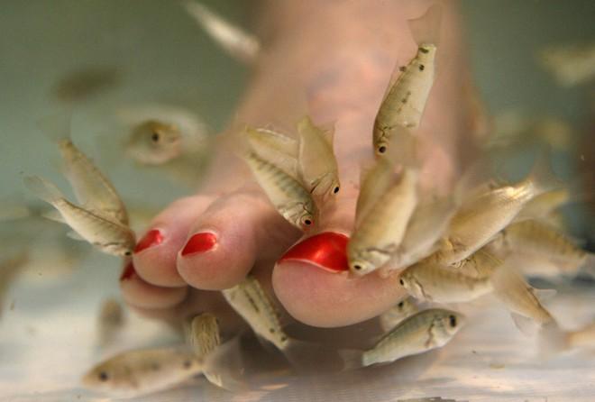 Nếu vẫn muốn trải nghiệm dịch vụ massage cho cá rỉa chân thì đây là những nguy hiểm bạn có nguy cơ phải đối mặt - Ảnh 2.