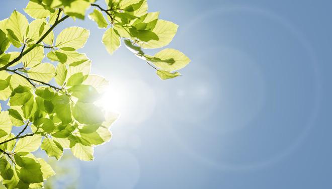 Có lẽ bạn sẽ phải phát ghen khi biết cây cối có hẳn loại gene để chống nóng - Ảnh 1.
