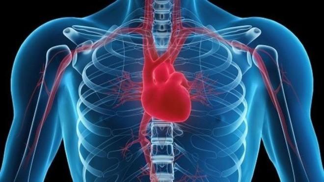 Ung thư có hàng trăm loại nhưng hiếm khi ta nghe nói tới ung thư tim - vì sao? - Ảnh 2.