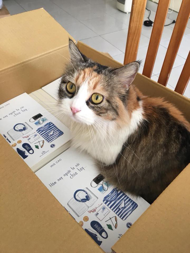 Vì một chú mèo, con gái thắc mắc rốt cuộc mình là con đẻ hay con nuôi của mẹ - Ảnh 4.