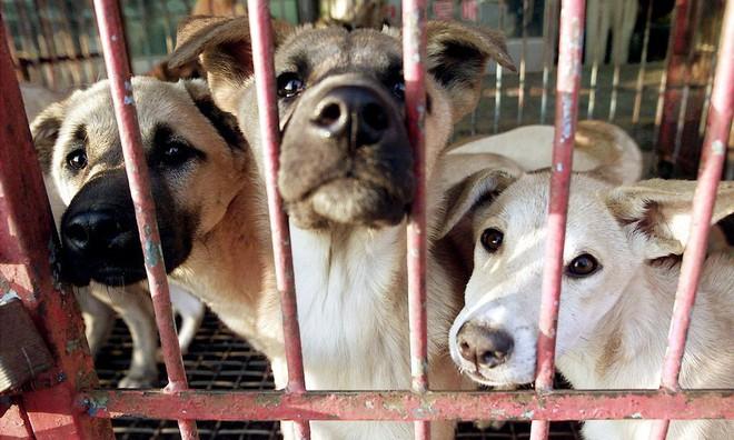 Trả lời câu hỏi tại sao người Trung Quốc ăn thịt chó?, thanh niên đưa ra quan điểm trái chiều gây tranh cãi dữ dội trên MXH - Ảnh 2.