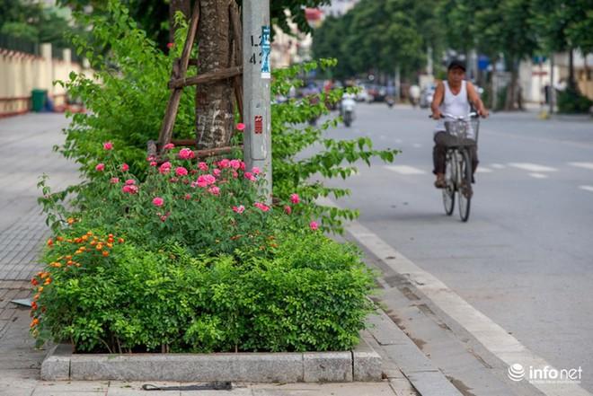 Hà Nội bỗng xuất hiện con đường hoa hồng đầu tiên tuyệt đẹp - Ảnh 1.