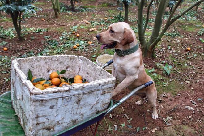 Chú chó nhỏ đội mũ chống nắng, hớn hở ngồi bán sầu riêng khiến dân mạng thích thú - Ảnh 6.