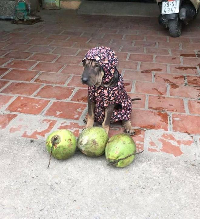 Chú chó nhỏ đội mũ chống nắng, hớn hở ngồi bán sầu riêng khiến dân mạng thích thú - Ảnh 7.