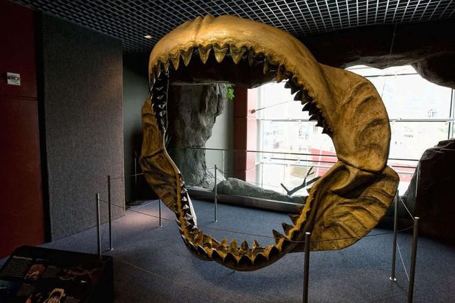 95% đại dương chưa được khai phá, vậy có khả năng nào Megalodon vẫn còn sống? - Ảnh 2.