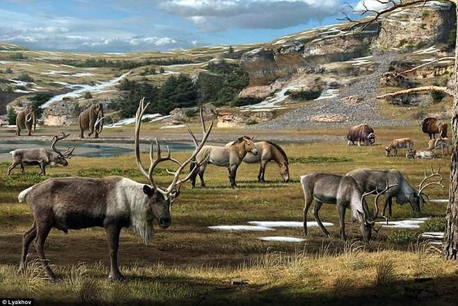 Phát hiện hóa thạch ngựa còn nguyên vẹn sau 40.000 năm tại hố tử thần ở Siberia - Ảnh 4.