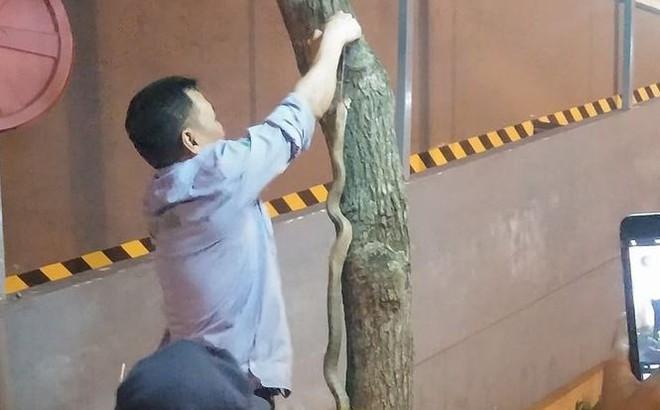 Hà Nội: Bé trai bị rắn cắn khi chơi ở công viên Linh Đàm