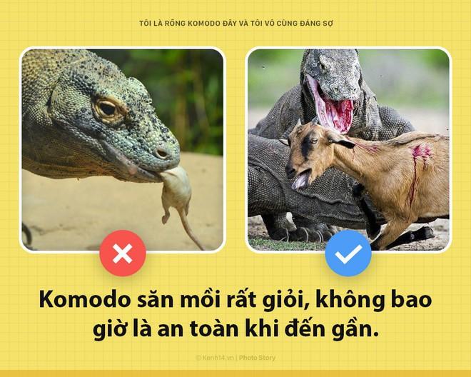 Xin chào! Tôi là rồng Komodo đây, và tôi là một con quái vật đáng sợ hơn các ông tưởng rất nhiều đấy - Ảnh 1.