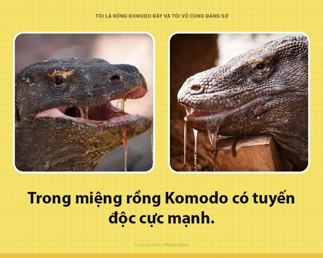 Xin chào! Tôi là rồng Komodo đây, và tôi là một con quái vật đáng sợ hơn các ông tưởng rất nhiều đấy - Ảnh 2.