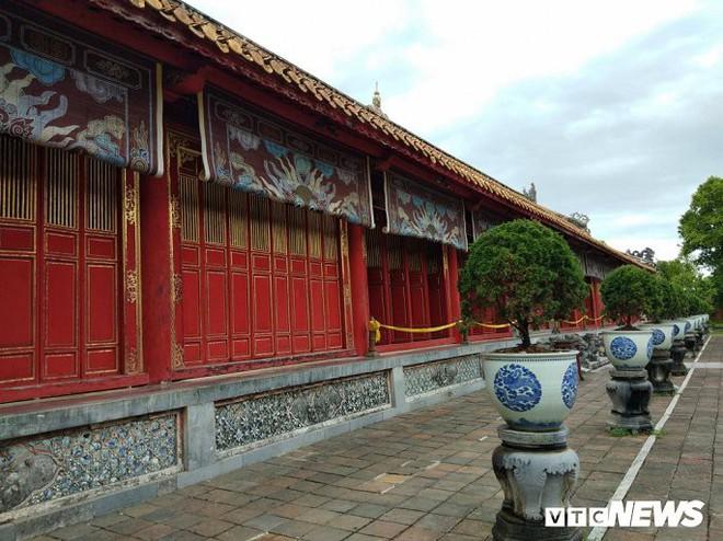 Ảnh: Cây thông trăm tuổi có dáng kỳ dị bậc nhất Hoàng Thành triều Nguyễn - Ảnh 1.