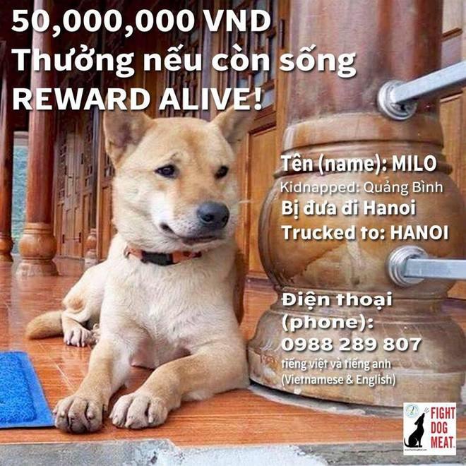 Chú chó Milo mất tích ở Phong Nha, người phụ nữ Mỹ hứa thưởng 50 triệu cho người tìm thấy - Ảnh 1.