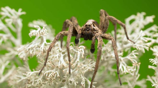 Đây là màu sắc mà mọi người sợ nhện nên tránh mặc, nếu không muốn khóc thét vì sợ hãi - Ảnh 1.