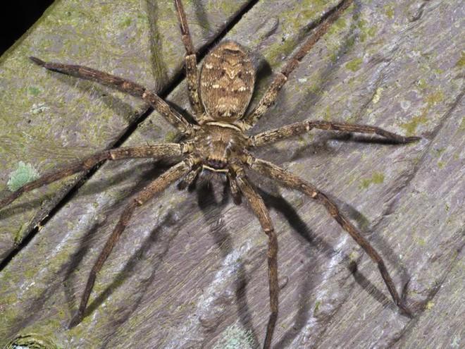 Đây là màu sắc mà mọi người sợ nhện nên tránh mặc, nếu không muốn khóc thét vì sợ hãi - Ảnh 2.