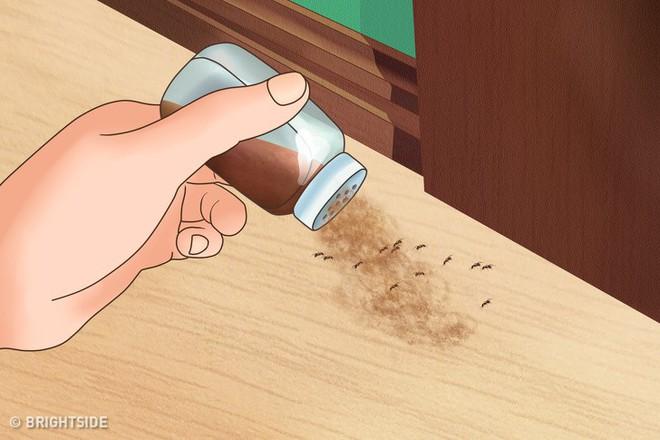Với 6 gia vị này, bạn không những đuổi được côn trùng mà còn làm được thuốc sâu an toàn - Ảnh 2.