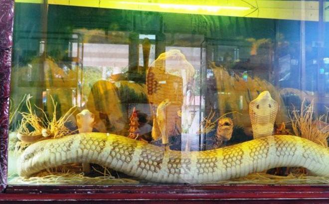Chuyện ly kỳ về những đại mãng xà lớn nhất thế giới ở Việt Nam