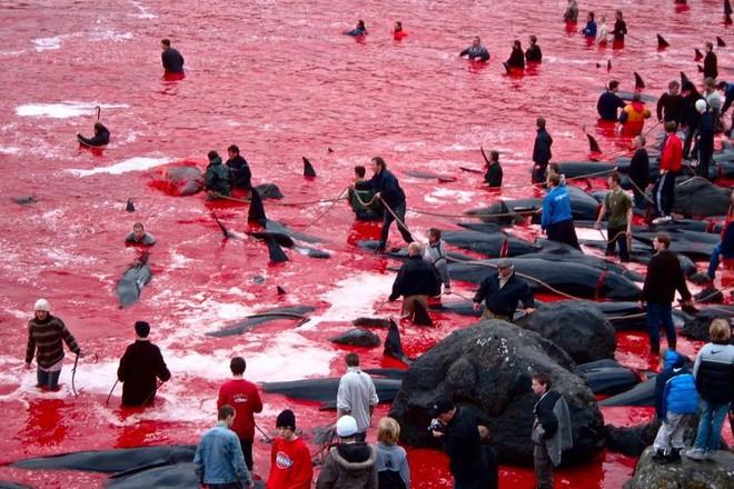 Bờ biển lại đẫm máu cá heo, PETA xót xa nói về nỗi đau và sự sợ hãi - Ảnh 3.