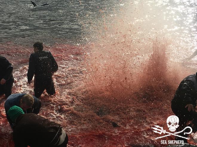 Bờ biển lại đẫm máu cá heo, PETA xót xa nói về nỗi đau và sự sợ hãi - Ảnh 4.