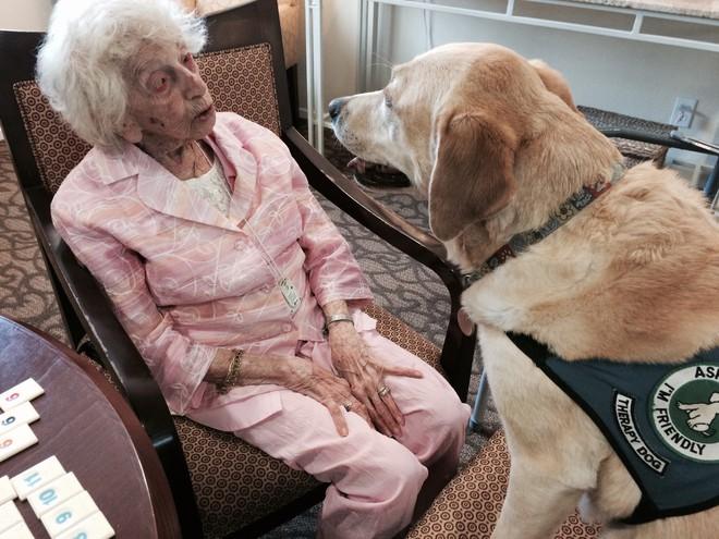 Sống cạnh con người khiến loài chó chịu khổ rất giỏi, và chúng biết ghen tuông! - Ảnh 7.