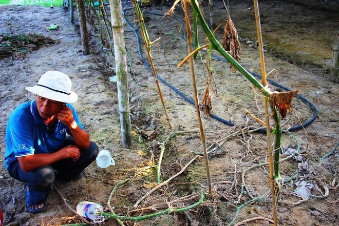 Làng trồng bí đao khổng lồ, có trái nặng tới 80kg ở Bình Định - Ảnh 7.